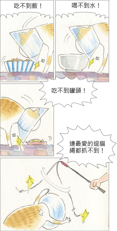 家裡來了一隻貓 滿清十大酷刑