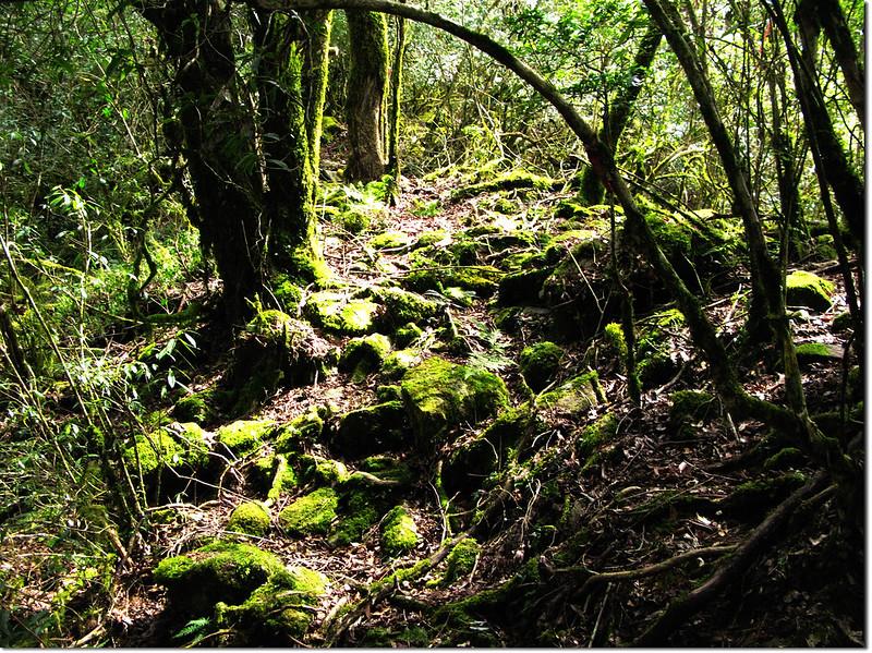 斯拉巴庫山登山途中景觀 2