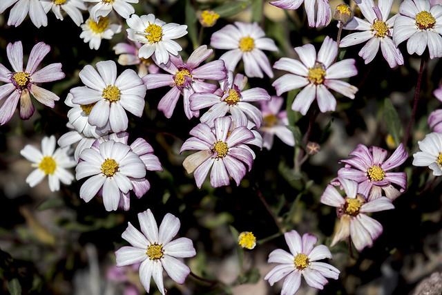 Wild Flower 5_7D2_020416