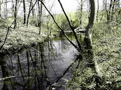 Brookside Preserve - Spring 2016 (47)