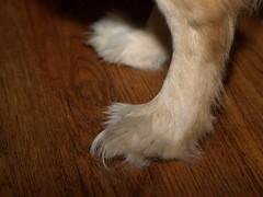 Yeti Feet