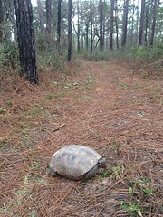 Met a tortoise. For whatever reasons, it decided to sit in the middle of the trail.