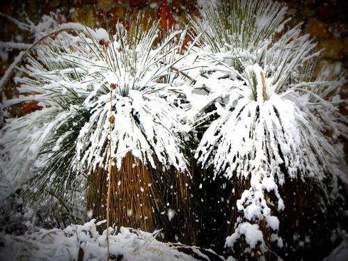 Backyard Snowfall
