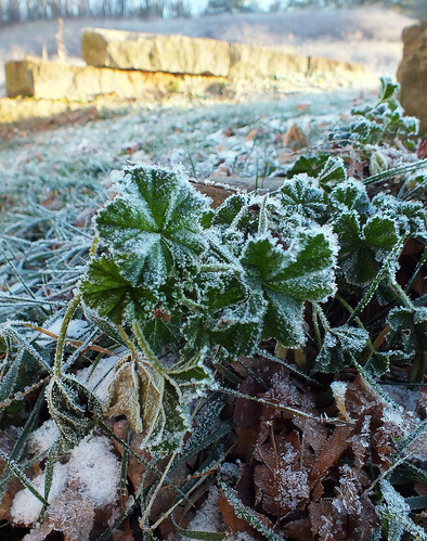 Even more weeds, with frost!