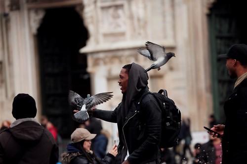 dando da mangiare ai piccioni