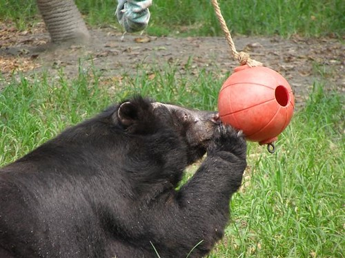 Quantock plays with a ball
