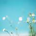 花 by cheng523