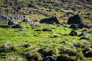 Sogndalsdalen og Anestølen