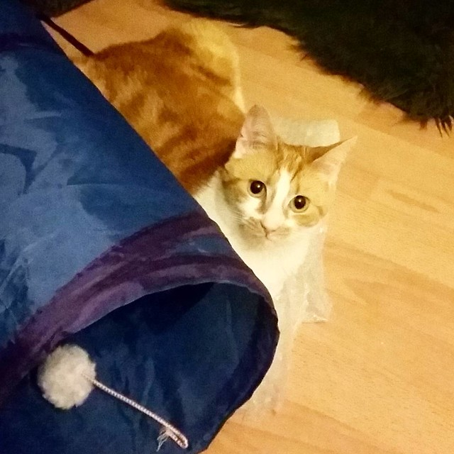 Meesha is enjoying her new tubular toy and cuddling up next to it #meeshathecat #meesha #catsofinstagram #kitty #kittycuddles #cutenessoverload