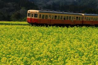 小湊鉄道 石神の菜の花畑