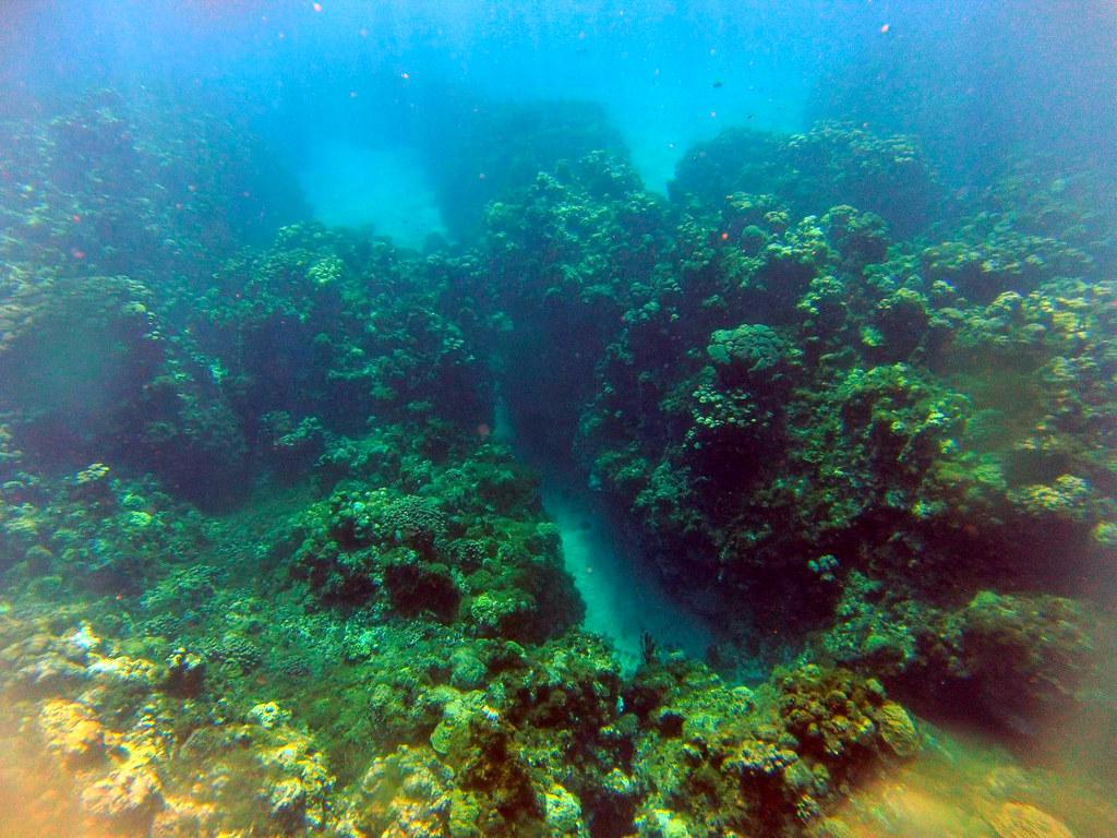 Excursión al arrecife en las islas caimán con el MSC Opera al fondo islas caimán - 25671689004 eafe391277 b - Snorkel en las Islas Caimán