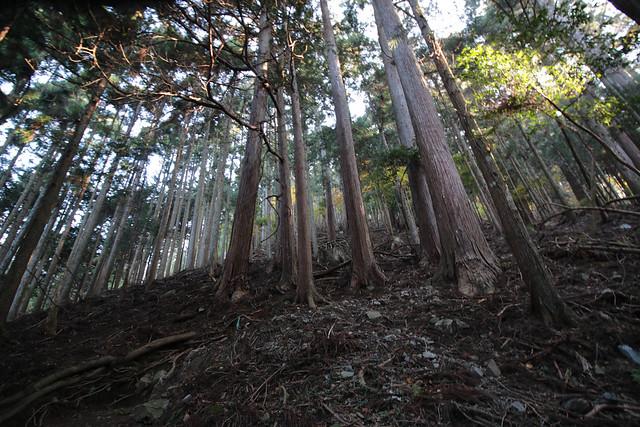 20141122-武奈ヶ岳&京都ライトアップ-0103.jpg