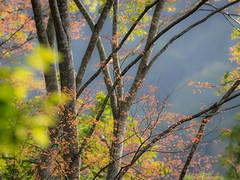 Scenery . Landscape   風景 . 景觀