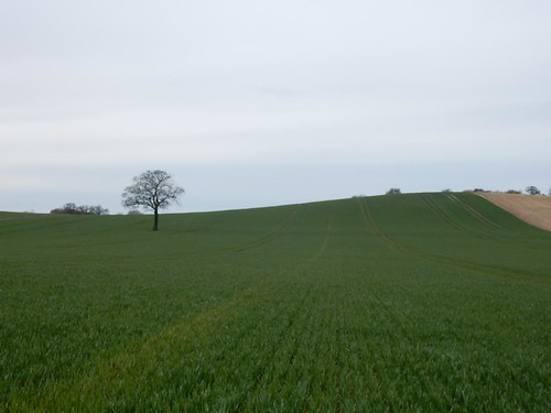 Tree with field