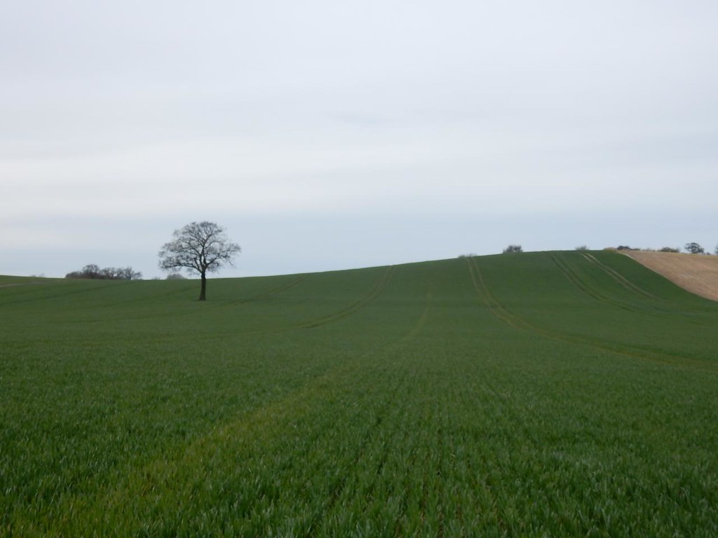Tree with field Harlington Circular