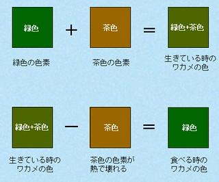 わかめの色変化 by 静岡県水産技術試験場