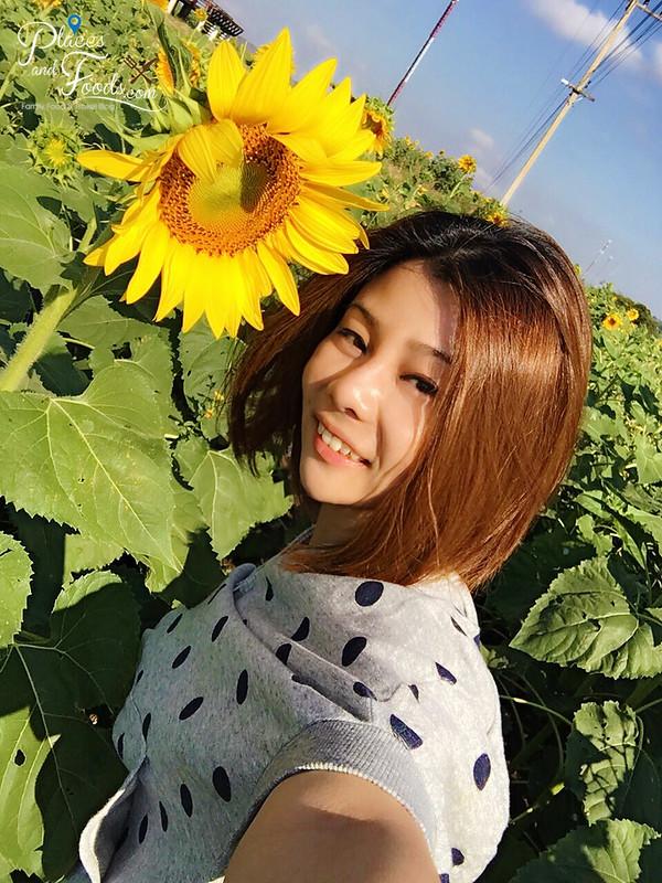 pak chong sunflower field janet