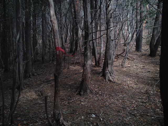 小島山 分岐 春日六合からの林道?
