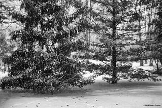 Snowy Wednesday Morning