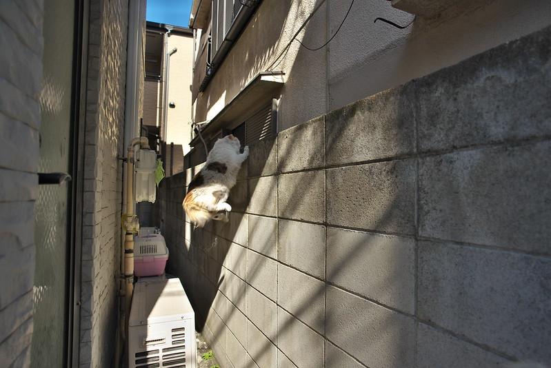東京路地裏散歩 ネコ 2016年2月11日