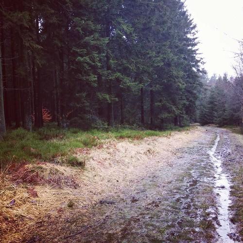 Hoe vettiger, hoe prettiger. #onderweg #hiking #ardennen #ardennenweekend #dardennen #fagne #venen