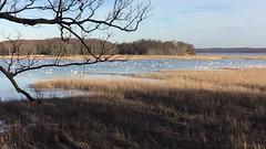 Mason Neck Wildlife Refuge - Swans
