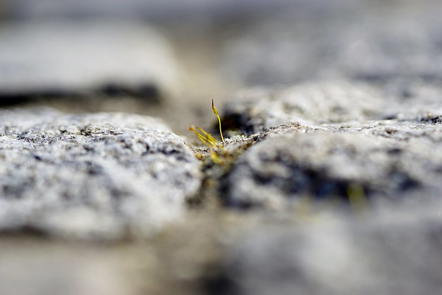 Sprouting between pavement