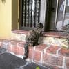 Esperando espero #Cats #Gatos