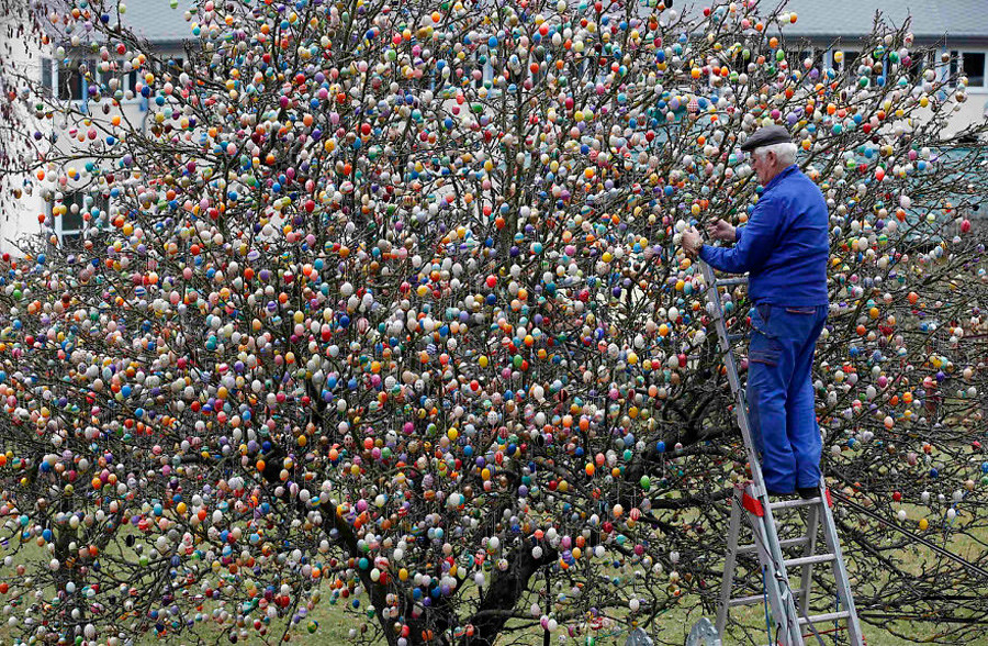 Фотография отсюда: www.boredpanda.com/easter-tree-decoration-10000-eggs