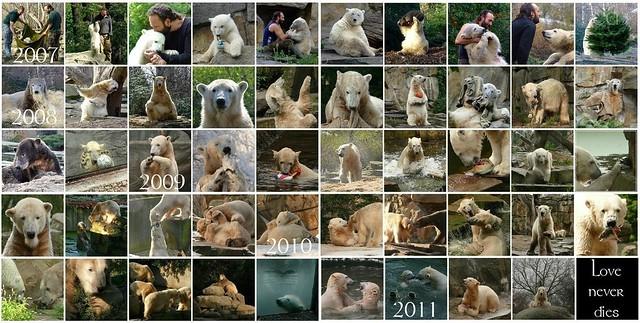 Knut März 2007 - März 2011