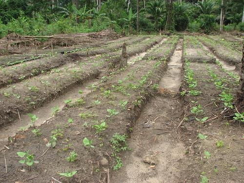 Jardin Obenge