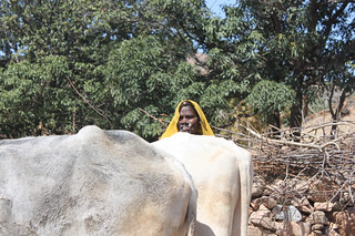 20130221_1670-woman-with-oxen_resize