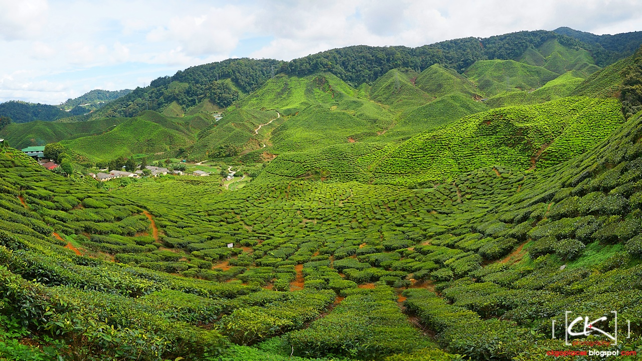 Cameron_Highlands_007