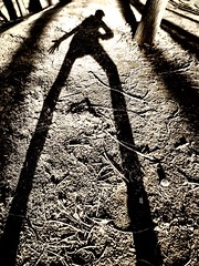 Volition as a Dancing Shadow