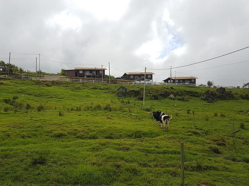 Desa Cattle Farm