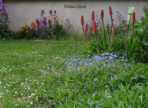 Ombre et lumière & fleurs du jardin