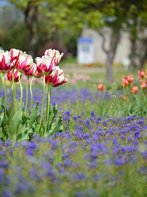 花壇 Flower bed