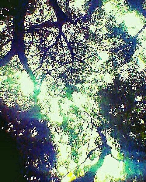 La luz traspasa las sombras.
