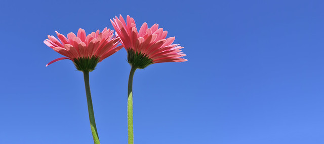 Flowers and blue sky!