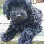 Maverick's past puppies !