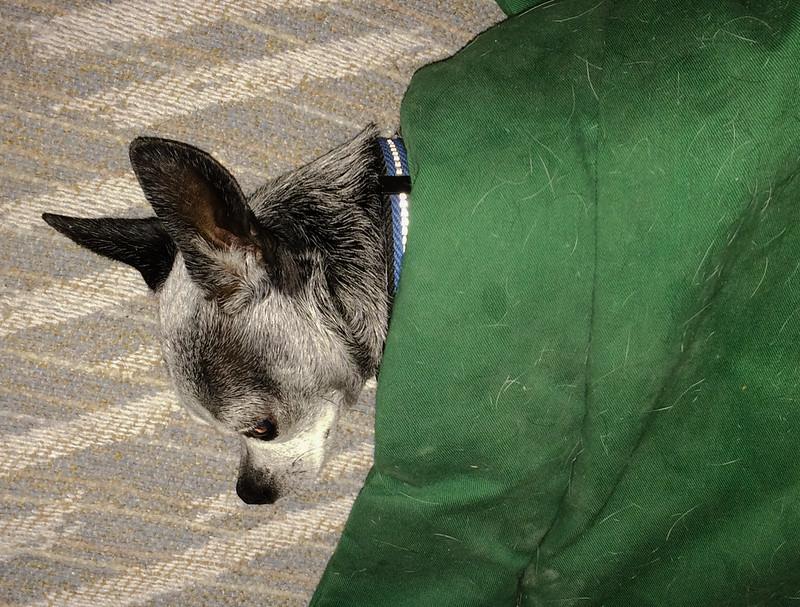 Betty Under A Blanket