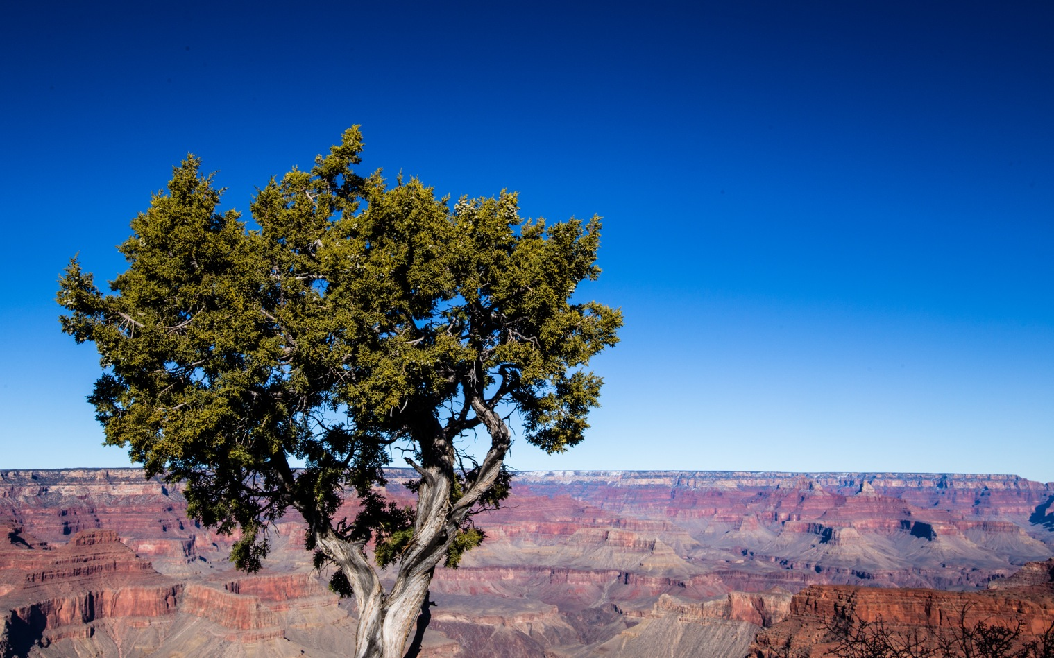 Grand Canyon Winter-1061