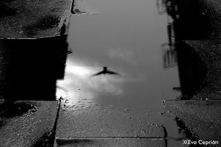 Volando - Flying (blanco y negro)