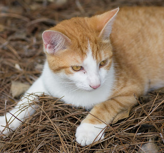 gatto generico rutigliano