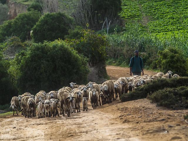 2015 décembre, Voyage au Maroc