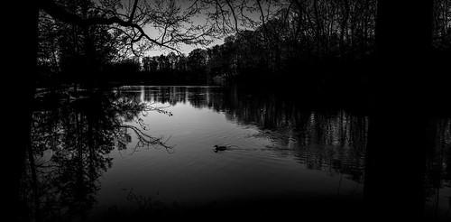 trees light sunset sky blackandwhite bw white black reflection bird water monochrome silhouette night dark mono blackwhite serene