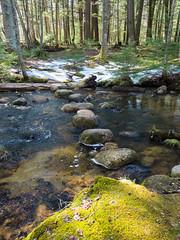 Plover River Segment Ice Age Trail