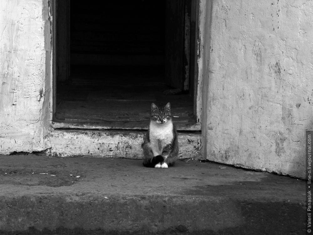 20160308_novik_cat_001
