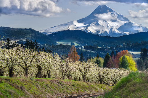 railroad trees mountain clouds oregon us spring woods unitedstates blossoms scenic tracks orchard fav20 farmland pear april flowering pearblossom farms blossoming fav30 forests hoodriver puffyclouds peartrees pinegrove fav10