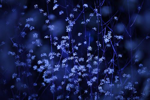 blue snow blur ex spring nikon bokeh sigma os apo 200 70 f28 dg 70200mm 200mm 70mm hsm d3s